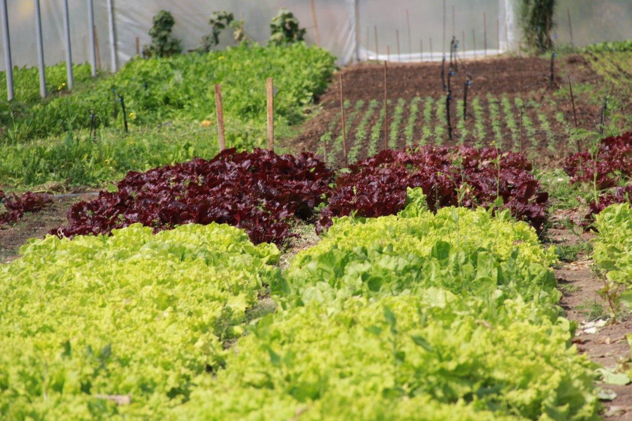 Las verduras de hoja