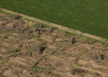 Greenpeace comprobó el avance de las topadoras en un área protegida que fue recategorizada de manera irregular por el Gobierno de Chaco; la ubicación del desmonte pone en peligro a un Parque Nacional.