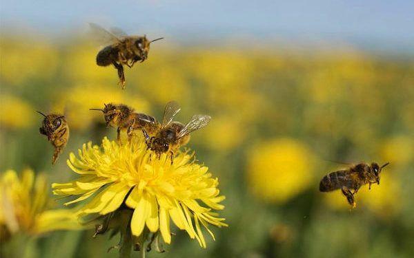 Metele flores al campo: La Fauba y CREA trabajan en un proyecto para aportar diversidad a los planteos agrícolas