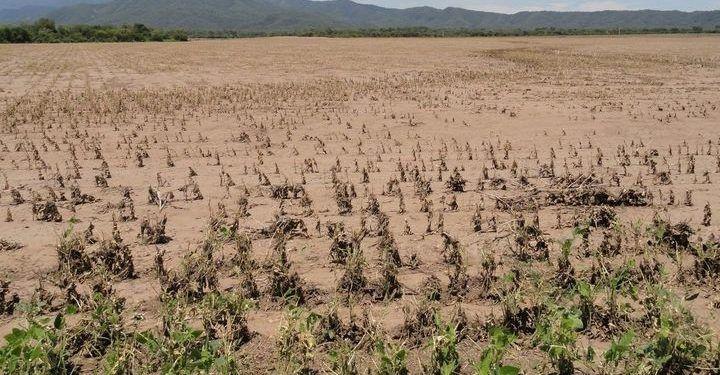 """Crónicas robadas: """"Por la sequía, el agro salteño está a días de un desastre"""""""