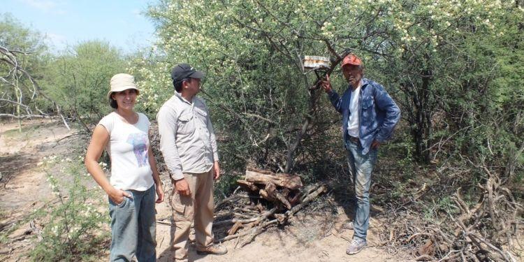 Abejas nativas y sin aguijón: Aportan una miel distinta y abren una posibilidad para pequeños productores